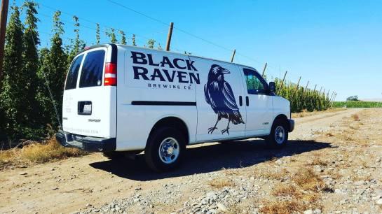 Black Raven Picking Up Hops In The Yakima Valley On September 13th